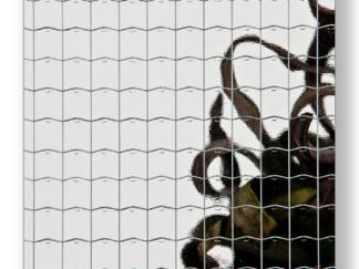 Drahtglas Glatt ohne Struktur